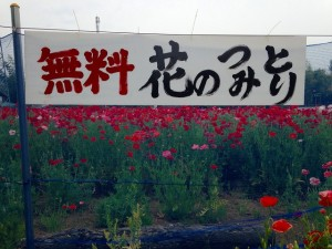 無料花摘み取り